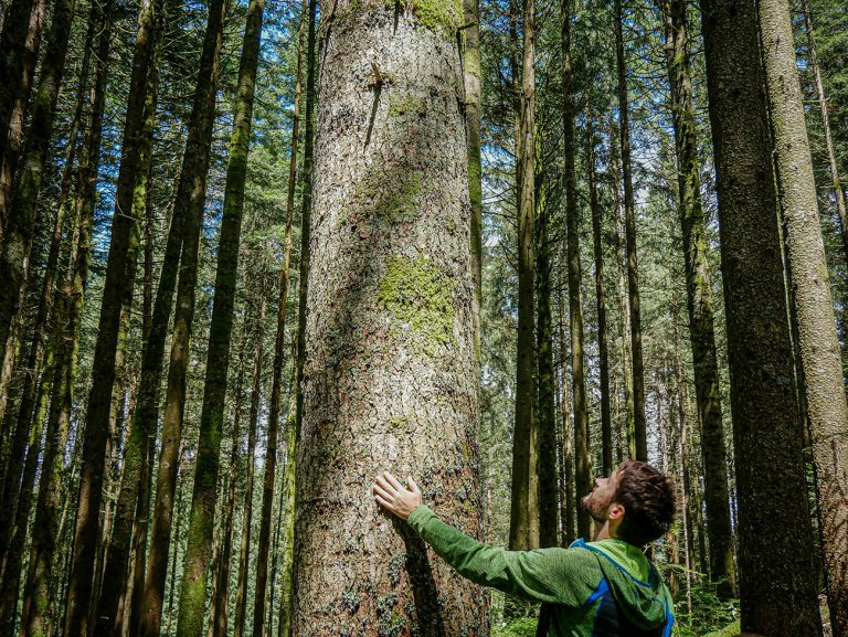 Promoting health through forests: different practices and benefits